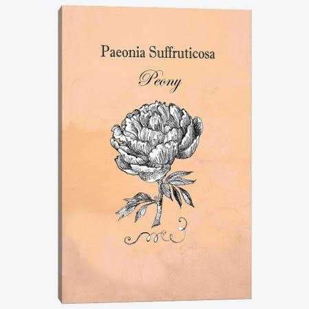 Peony - Botanical I Canvas Print #FPT123} by Fanitsa Petrou Art Print