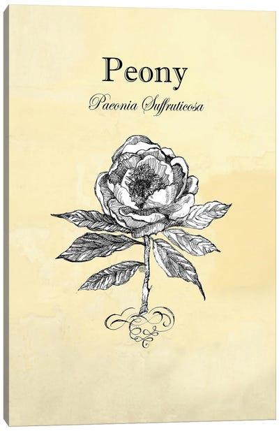 Peony - Botanical II Canvas Art Print