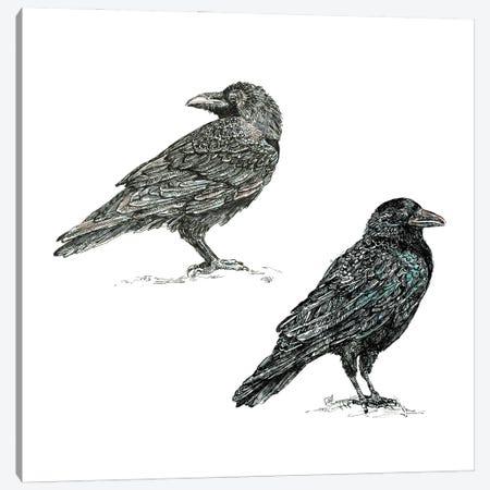 Crows Canvas Print #FPT132} by Fanitsa Petrou Canvas Artwork