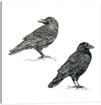 Crows Canvas Art Print