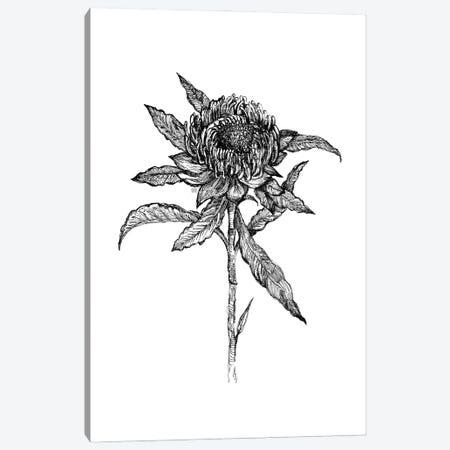 Flower Drawing Canvas Print #FPT139} by Fanitsa Petrou Canvas Artwork