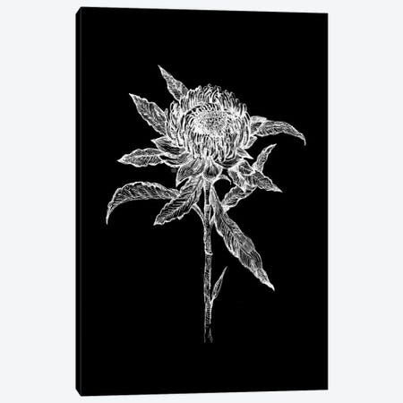 Flower Drawing In Black And White Canvas Print #FPT141} by Fanitsa Petrou Canvas Print