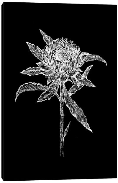 Flower Drawing In Black And White Canvas Art Print