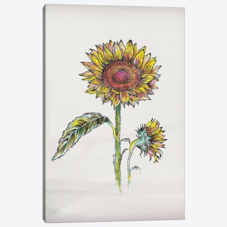 Sunflower III Canvas Print #FPT221} by Fanitsa Petrou Canvas Art