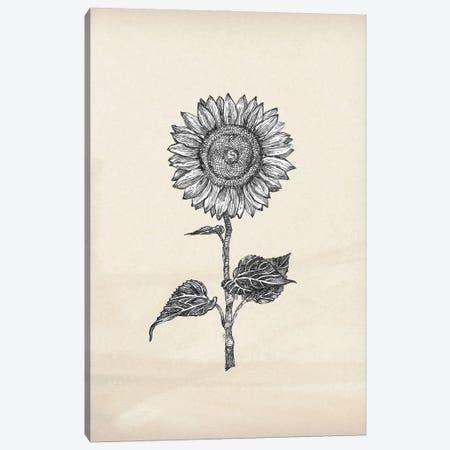 Sunflower - 4 Canvas Print #FPT222} by Fanitsa Petrou Canvas Art