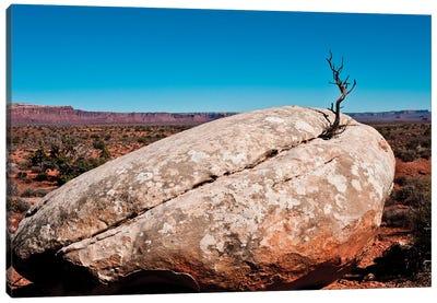 USA, Utah, Bluff. Creosote bush growing from boulder Canvas Art Print