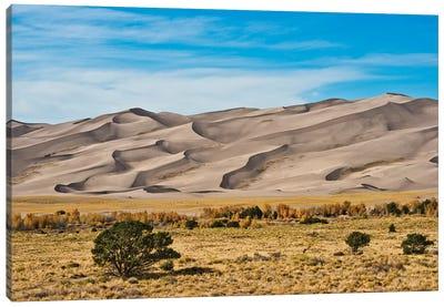 USA, Colorado, Alamosa, Great Sand Dunes National Park and Preserve I Canvas Art Print