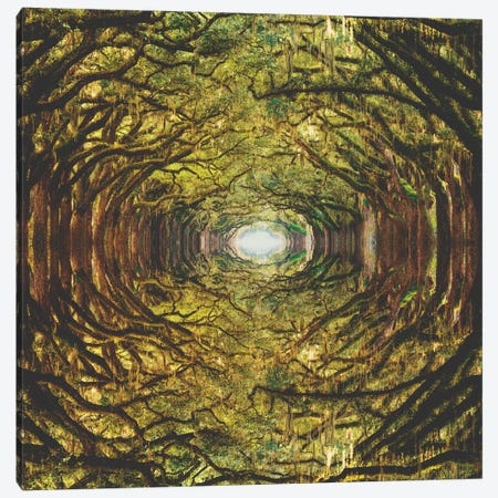 Woods I Canvas Print #FRO42} by Fran Rodriguez Canvas Art