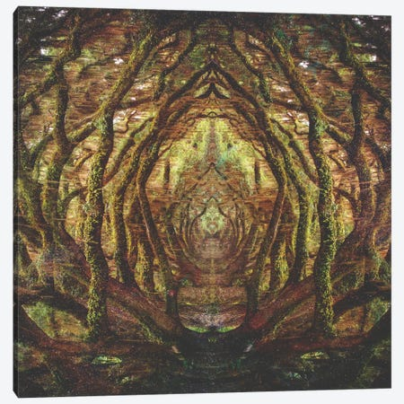 Woods II Canvas Print #FRO43} by Fran Rodriguez Canvas Artwork