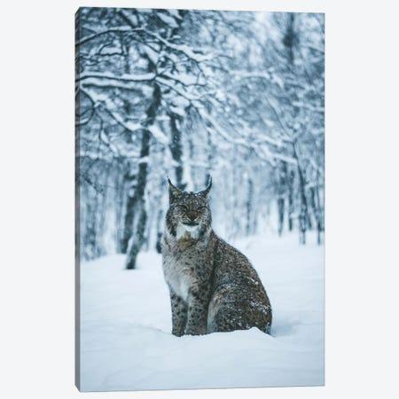 Lynx Canvas Print #FSB33} by Steffen Fossbakk Art Print