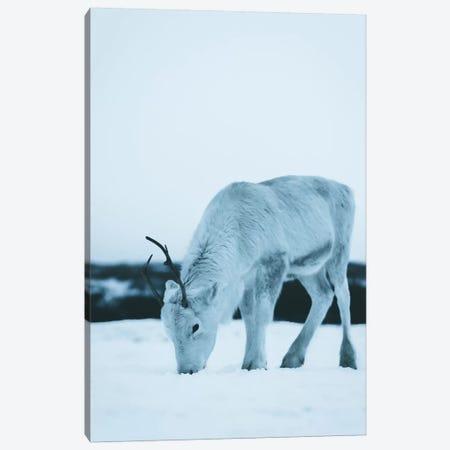 Reindeer Canvas Print #FSB42} by Steffen Fossbakk Canvas Art