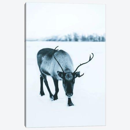 Shy Reindeer Canvas Print #FSB51} by Steffen Fossbakk Canvas Art Print