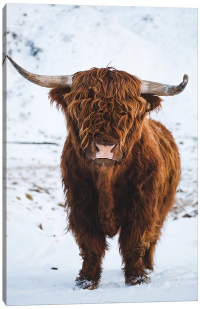 Highland Cattle I Canvas Art Print
