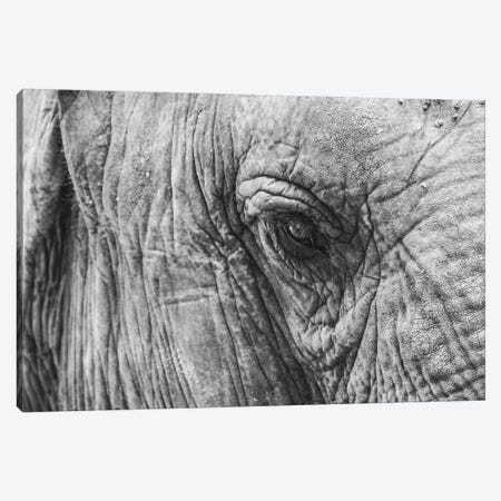 Elephant's Eye Canvas Print #FSC15} by Florian Schleinig Canvas Print