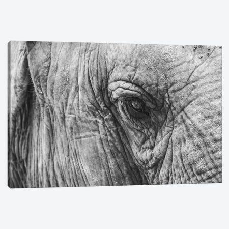 Elephant's Eye Canvas Print #FSC15} by Florian Schleinig Canvas Print