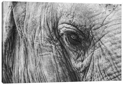 Elephant's Eye Canvas Art Print