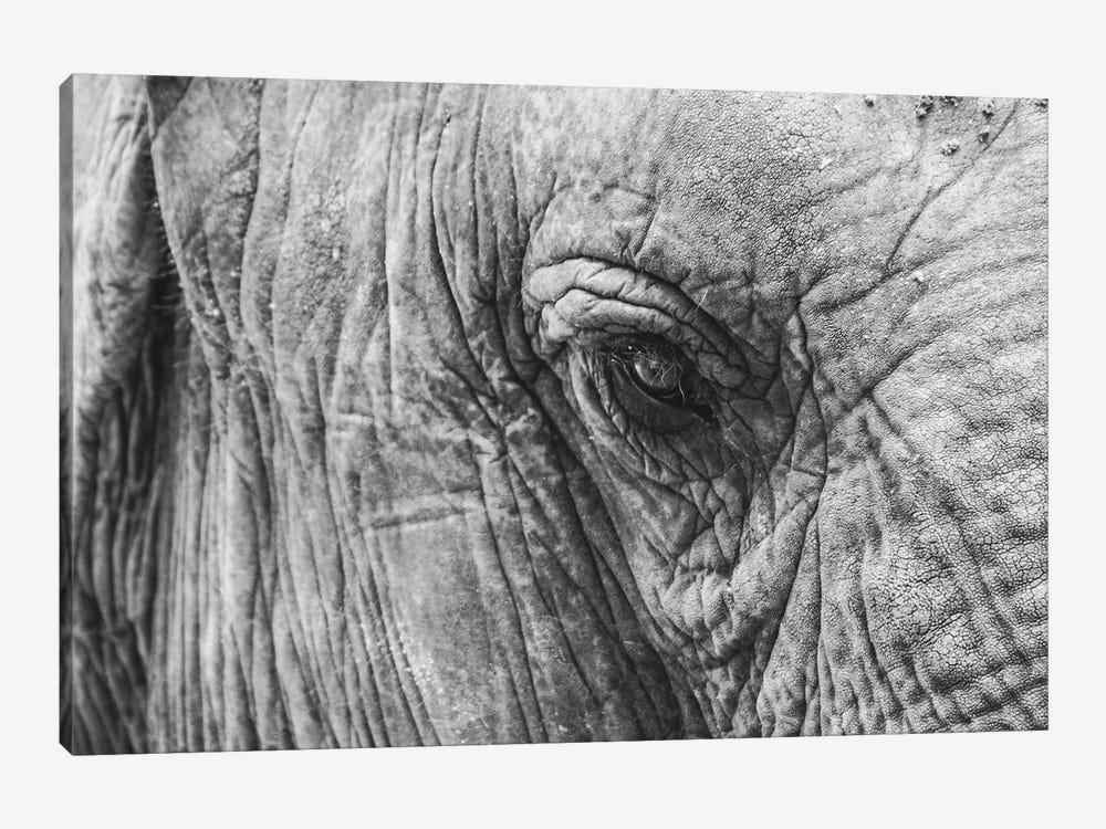 Elephant's Eye by Florian Schleinig 1-piece Canvas Artwork