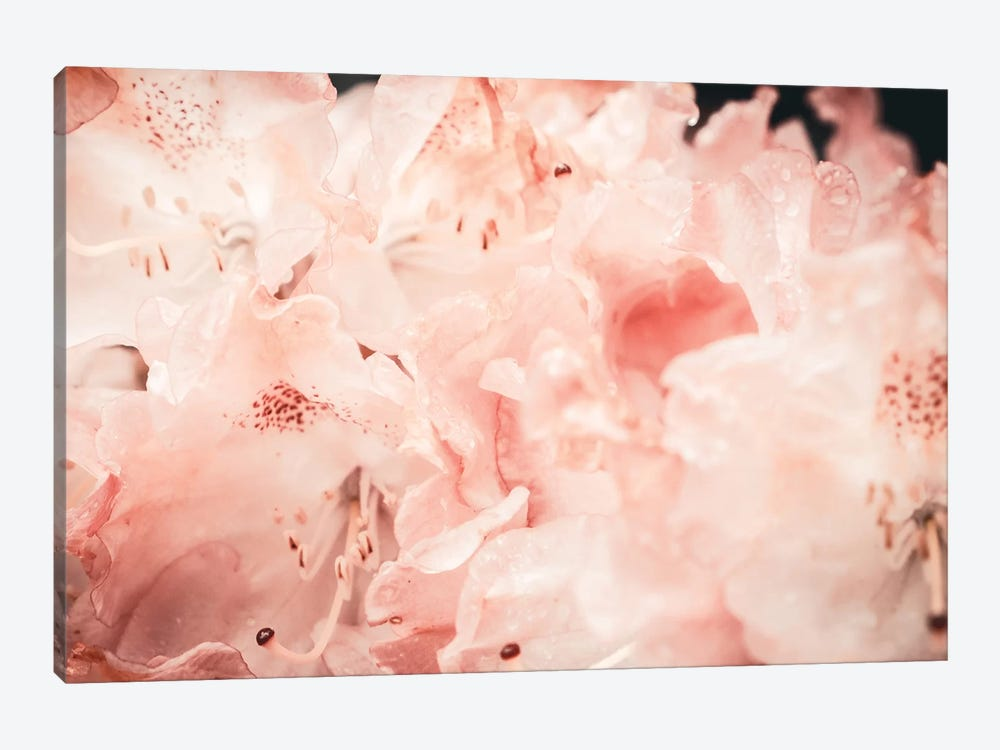 Hydrangea by Florian Schleinig 1-piece Canvas Wall Art