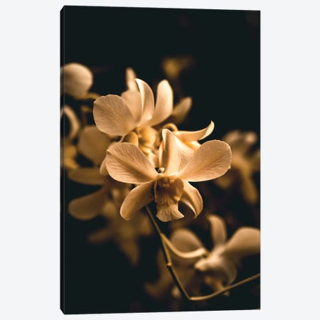 Orchid Canvas Print #FSC25} by Florian Schleinig Canvas Artwork