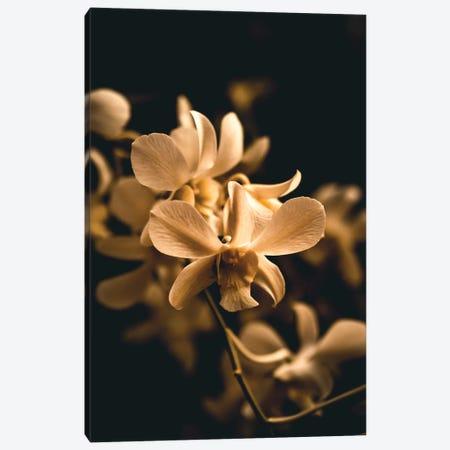 Orchid Canvas Print #FSC25} by Florian Schleinig Canvas Artwork