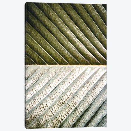 Palm Leaf Canvas Print #FSC26} by Florian Schleinig Canvas Artwork