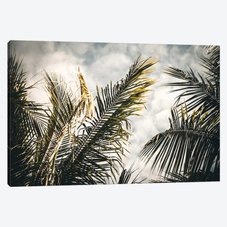 Palm Sky Canvas Print #FSC27} by Florian Schleinig Canvas Art