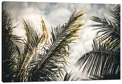 Palm Sky Canvas Art Print