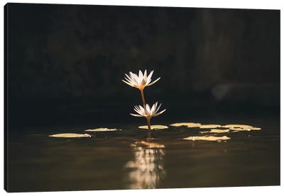Rose Of Water Canvas Art Print