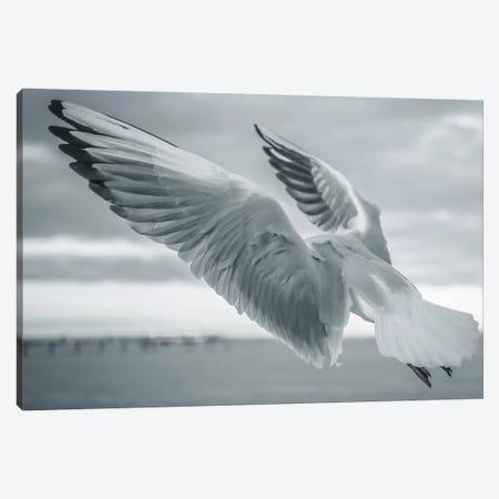 Seagulls I Canvas Print #FSC34} by Florian Schleinig Canvas Print