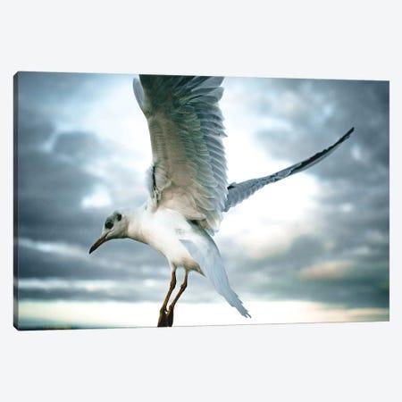 Seagulls II Canvas Print #FSC35} by Florian Schleinig Art Print