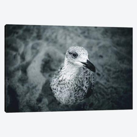 Seagulls V Canvas Print #FSC38} by Florian Schleinig Canvas Artwork