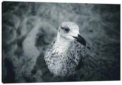 Seagulls V Canvas Art Print