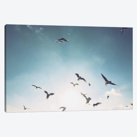 Seagulls VII Canvas Print #FSC40} by Florian Schleinig Canvas Print