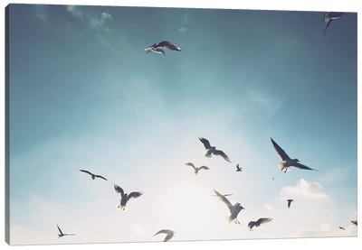 Seagulls VII Canvas Art Print