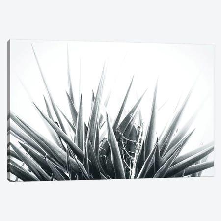 Stings Canvas Print #FSC42} by Florian Schleinig Canvas Print