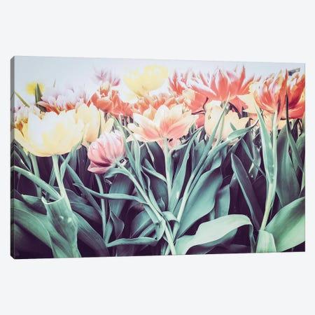 Tulipa Humilis Canvas Print #FSC48} by Florian Schleinig Canvas Art Print