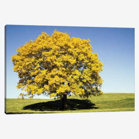 Fall II Canvas Print #FSC62} by Florian Schleinig Canvas Print