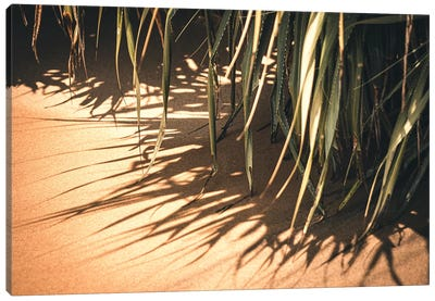 Beach Nature Canvas Art Print