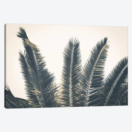Palm Leaves Canvas Print #FSC74} by Florian Schleinig Canvas Art Print
