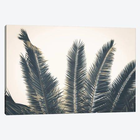 Palm Leaves Canvas Print #FSC74} by Florian Schleinig Canvas Art Print