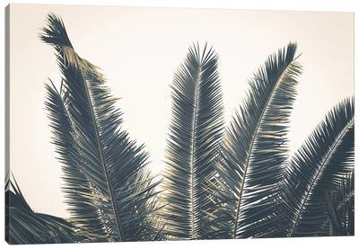 Palm Leaves Canvas Art Print