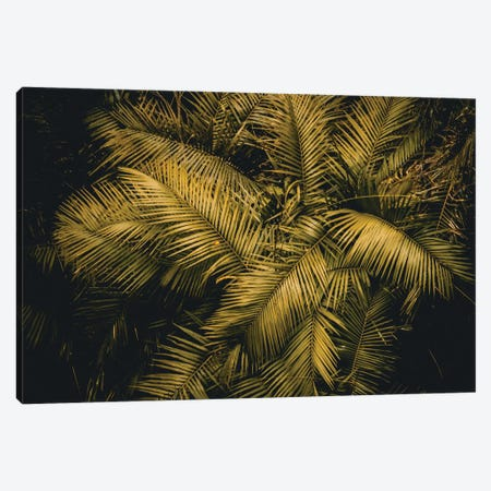 Palm Tree Canvas Print #FSC76} by Florian Schleinig Canvas Print