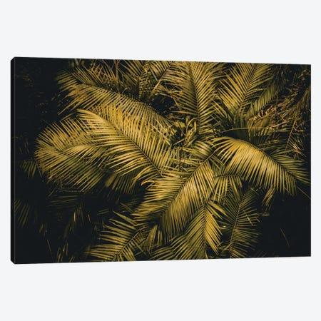 Palm Tree Canvas Print #FSC76} by Florian Schleinig Canvas Print