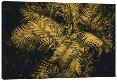 Palm Tree Canvas Art Print