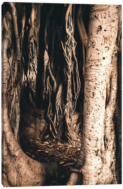 Aerial Roots Canvas Art Print