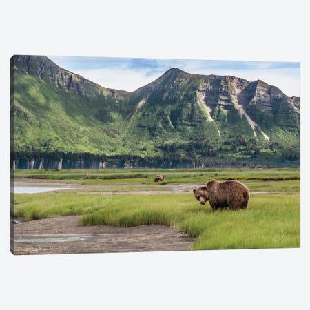 USA, Alaska, Katmai National Park, Hallo Bay. Coastal Brown Bear I Canvas Print #FZU1} by Frank Zurey Canvas Art Print