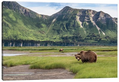 USA, Alaska, Katmai National Park, Hallo Bay. Coastal Brown Bear I Canvas Art Print