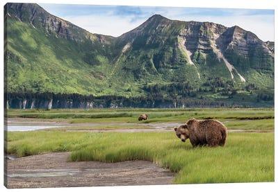 USA, Alaska, Katmai National Park, Hallo Bay. Coastal Brown Bear I Canvas Art Print