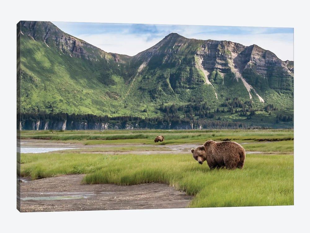 USA, Alaska, Katmai National Park, Hallo Bay. Coastal Brown Bear I by Frank Zurey 1-piece Canvas Artwork