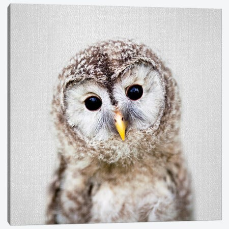 Baby Owl Canvas Print #GAD10} by Gal Design Canvas Print